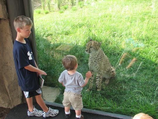 Nathan cheetah 5-10