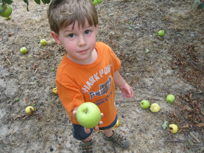 Apple picking 7-22-12